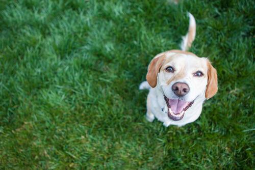 4 здоровых привычки, полезных для сердца вашей собаки
