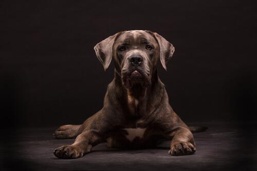 Perros famosos de la literatura inglesa: sabueso de Baskerville