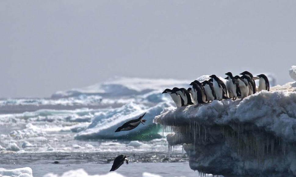 El cementerio de pingüinos en la Antártida