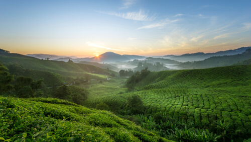 La importancia de la cadena trófica en la naturaleza
