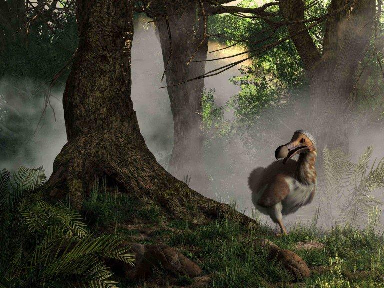 El dodo: la historia de un ave extinta
