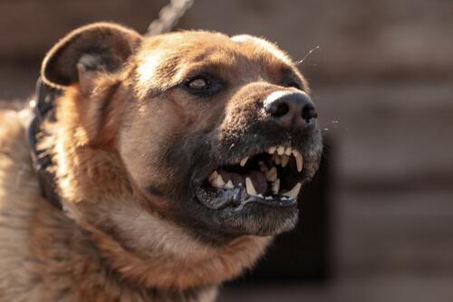 Conoce el porqué pueden atacar los perros