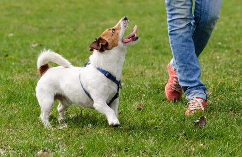 Psicología para adiestrar perros