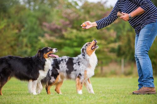Psicología para enseñar perros