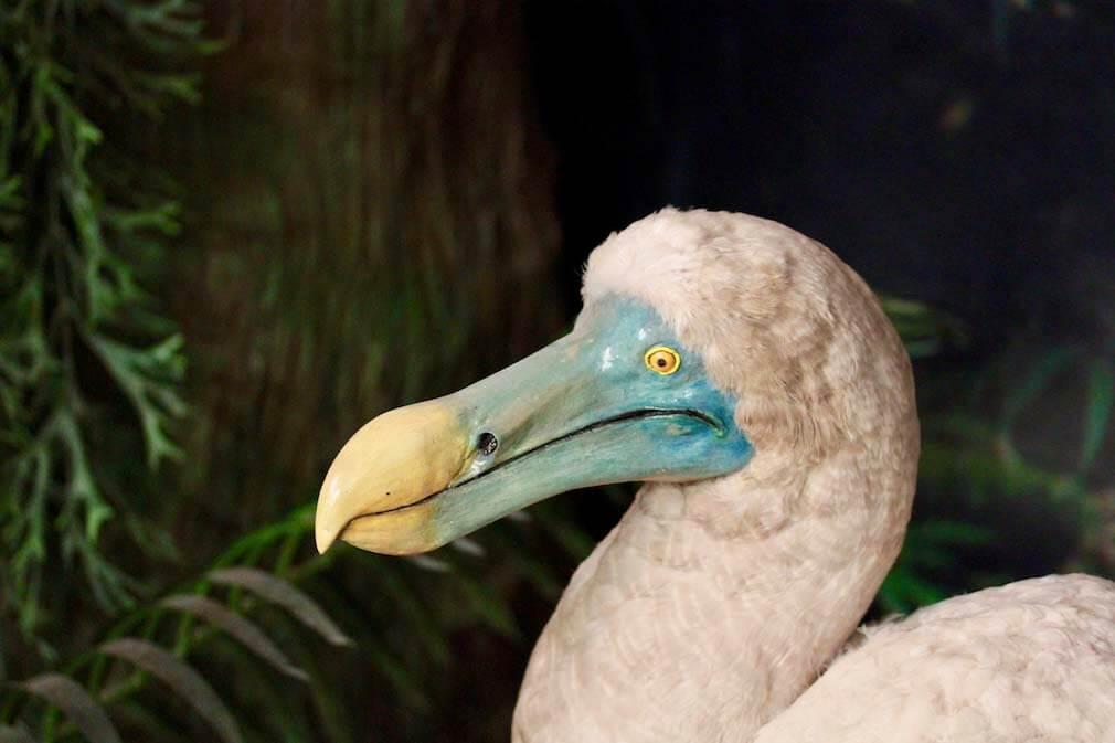 Qué es un dodo