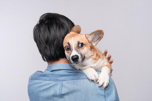 Qué hacer si un perro tiene miedo