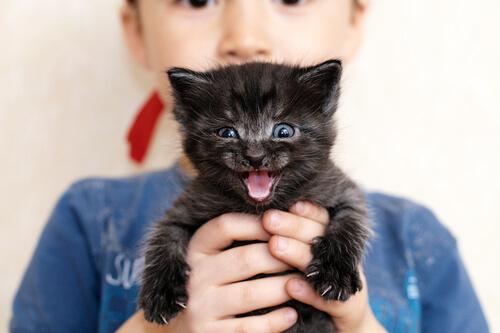 Ronroneo de los gatos: qué significa