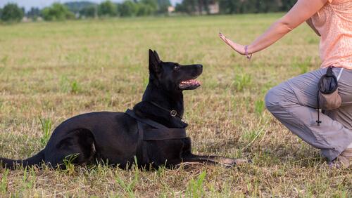 Señales de calma en perros