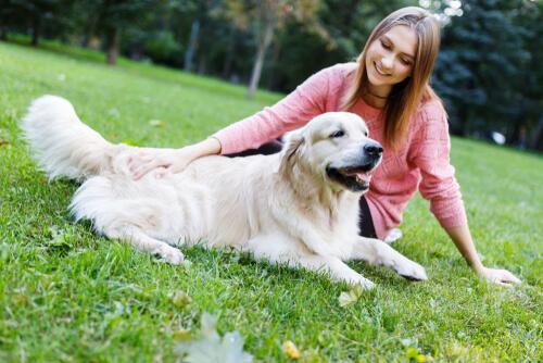 Señales de calma para educar a un perro