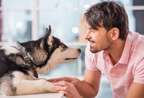 Conoce todo sobre telepatía animal