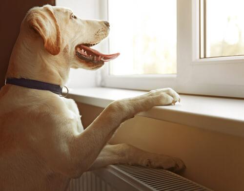 Telepatía en los perros