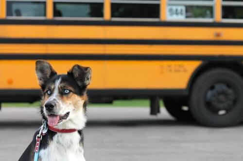 5 tips para viajar en transporte público con una mascota