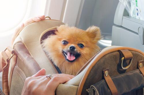 Viajar con tu perro por Europa