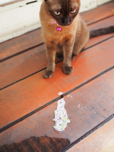 Vómitos en gatos: causas