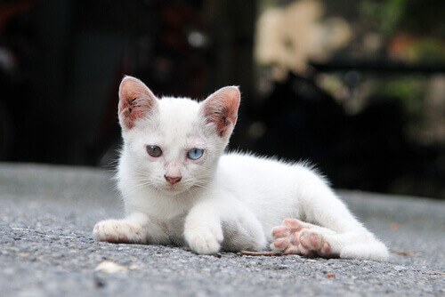 Abandono de gatos