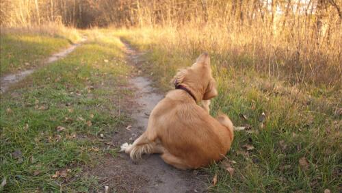 Собачья аллергия: причины и симптомы