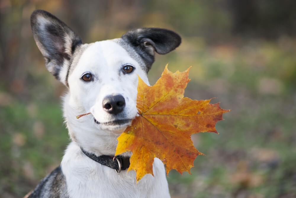 Alimentación para tu perro en otoño