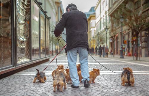 Los animales alivian la soledad