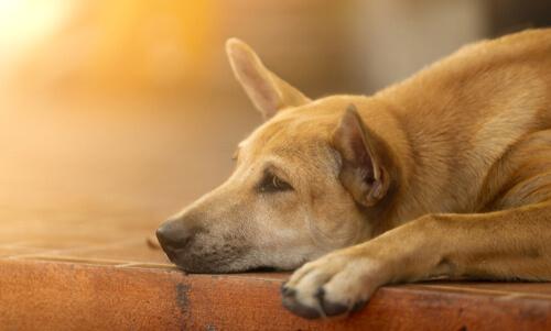 6 consejos para animar a un perro