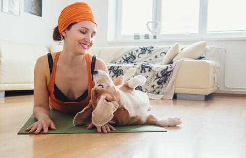 Beneficios del doga en perros