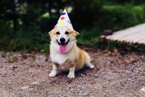 Celebrar cumpleaños al perro