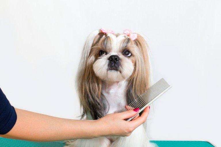 5 mejores cepillos para peinar a tu mascota
