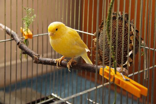 Clasificación de los parásitos de las aves