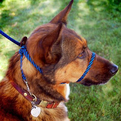 Collar hocico para perros