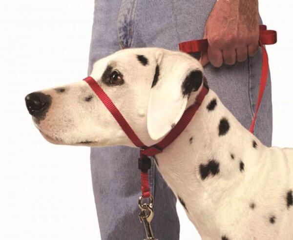 Collar ronzal: cómo utilizarlo correctamente