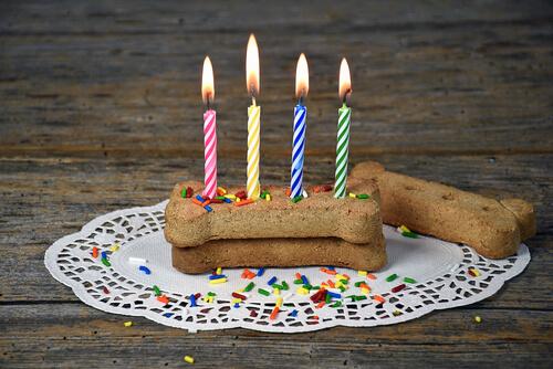 Comida para perros en cumpleaños