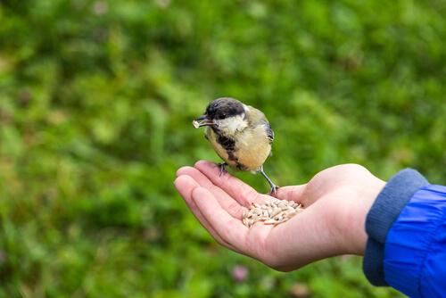 Cómo alimentar de forma correcta un pájaro