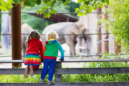 ¿Cuál es la diferencia entre un zoo y un santuario?