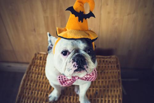Одень своего питомца на Хэллоуин