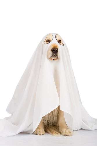 Disfrazar a tu mascota en Halloween de fantasma