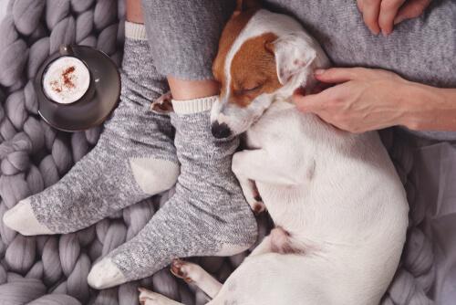 Dormir al lado del perro