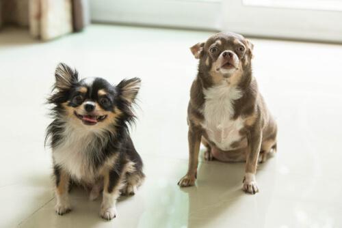 Dos perros mejor que uno