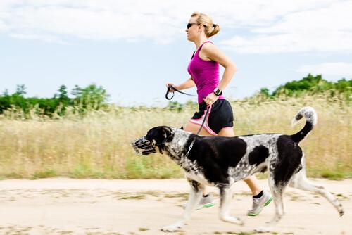 Здоровье суставов у домашних животных: все, что нужно знать
