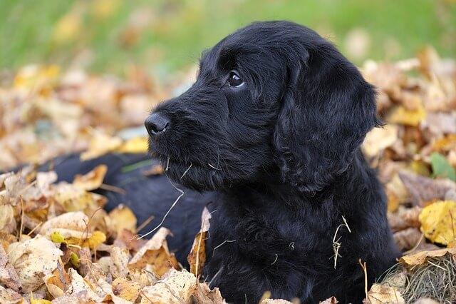 Enfermedades del perro en otoño