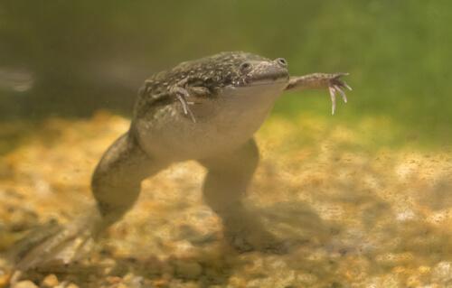 Enriquecimiento ambiental en anfibios