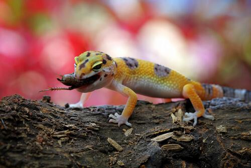 Enriquecimiento ambiental en lagartos