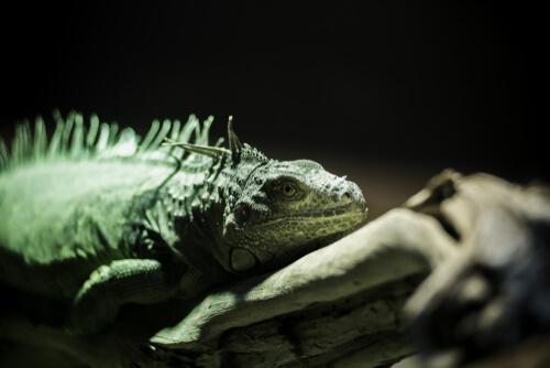 Enriquecimiento ambiental en reptiles y anfibios
