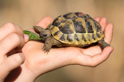Enriquecimiento ambiental tortugas