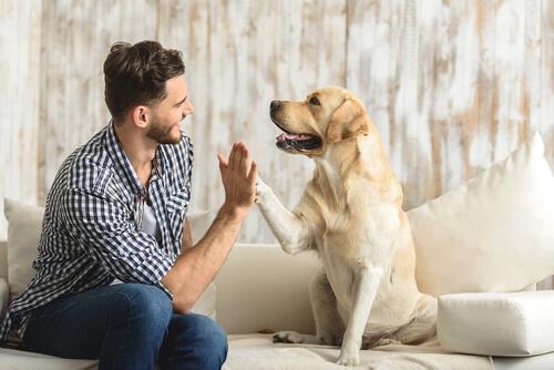 Enseñar a saludar perro