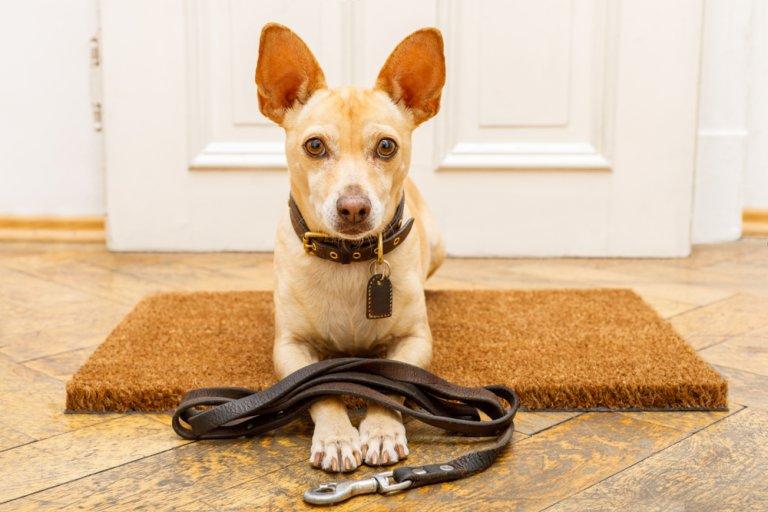 7 errores a la hora de educar a los perros