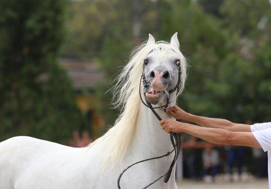 Что такое клиническая этология лошадей