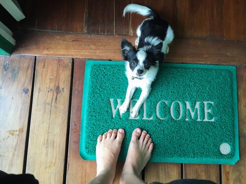 Cómo evitar que los perros salten encima para saludar