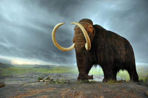 Extinción de los mamuts