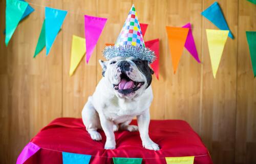 Fiesta de cumpleaños para perros: tips para tener en cuenta