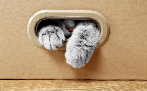 ¿Por qué a tu gato le gusta la caja de cartón?
