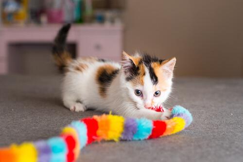 Juegos de inteligencia para gatos